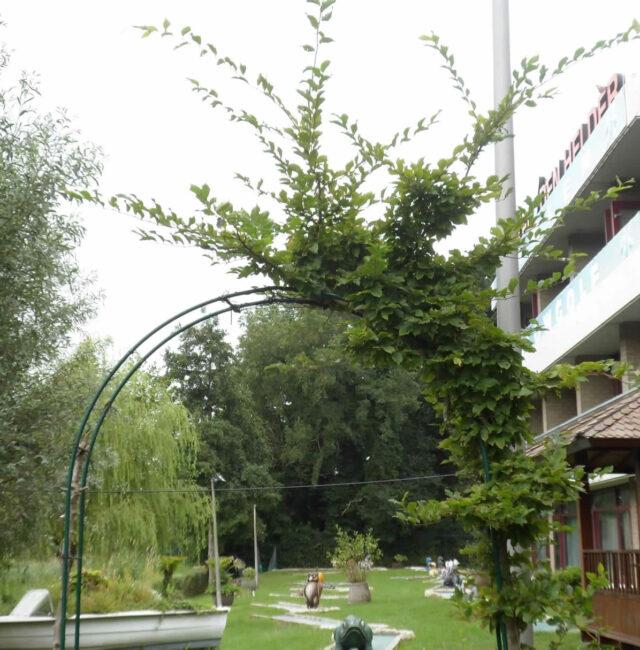 Hotel-den-Helder-33